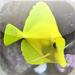Aquarium Fish Tap Puzzles